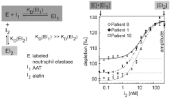 quantitative analysis of protease_zhenya